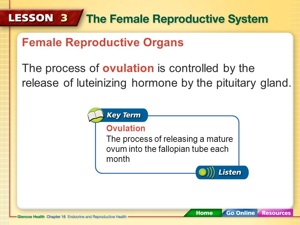 Female Reproductive Organs The process of ovulation is controlled by the release of luteinizing hormone by the pituitary gland.