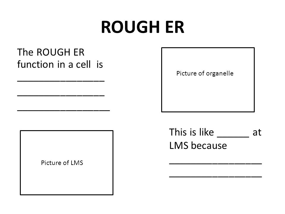 ROUGH ER The ROUGH ER function in a cell is ________________ ________________ _________________ This is like ______ at LMS because _________________ _________________ Picture of organelle Picture of LMS