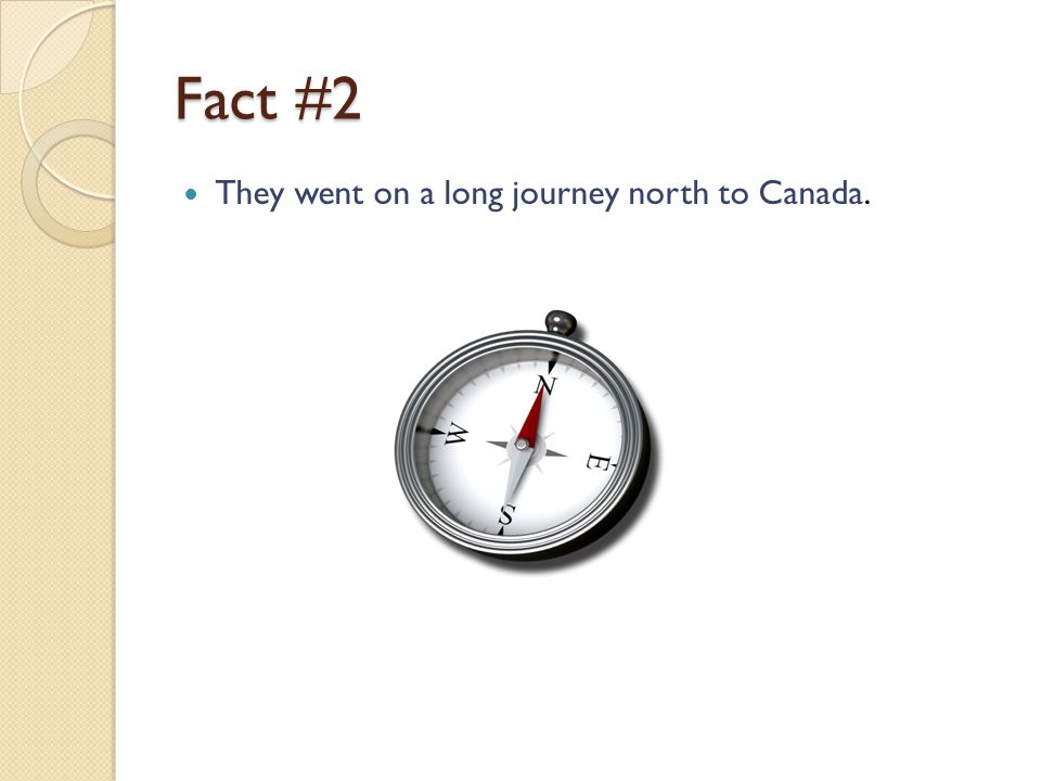 Fact #2 They went on a long journey north to Canada.