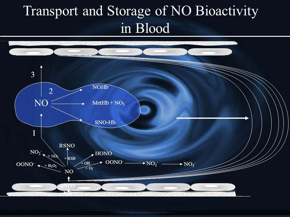 eNOS NO 1 NOHb MetHb + NO 3 - SNO-Hb 2 3 NO + RSH RSNO + O 2 - OONO - NO 2 - + OH + ½O 2 + H 2 O 2 NO 2 - HONO NO 3 - OONO - Transport and Storage of