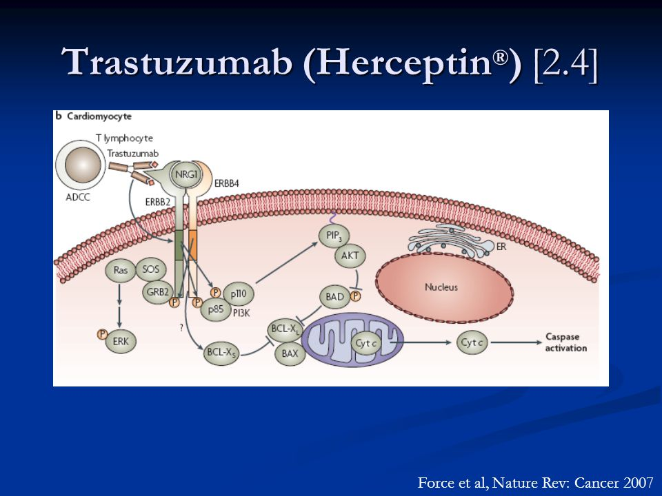 Trastuzumab (Herceptin ® ) [2.4] Force et al, Nature Rev: Cancer 2007