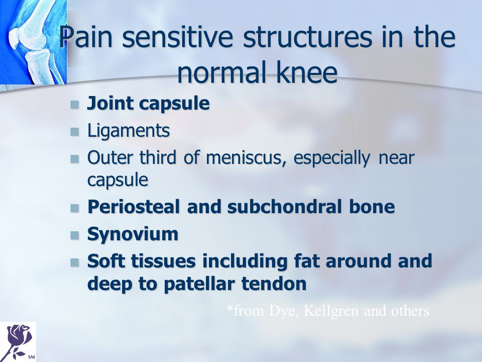 Pain sensitive structures in the normal knee Joint capsule Joint capsule Ligaments Ligaments Outer third of meniscus, especially near capsule Outer th