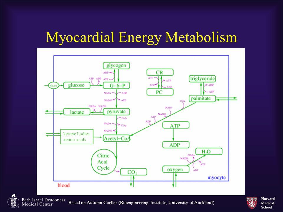 Harvard Medical School Myocardial Energy Metabolism ketone bodies amino acids Based on Autumn Cuellar (Bioengineering Institute, University of Aucklan