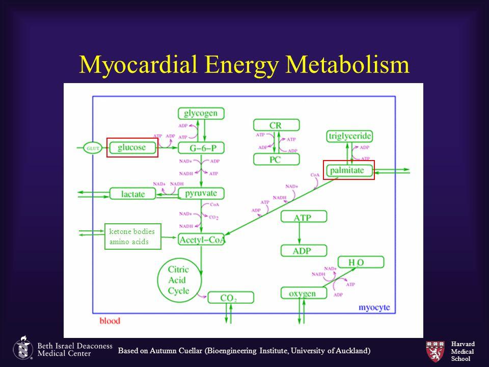 Harvard Medical School Myocardial Energy Metabolism Based on Autumn Cuellar (Bioengineering Institute, University of Auckland) ketone bodies amino aci