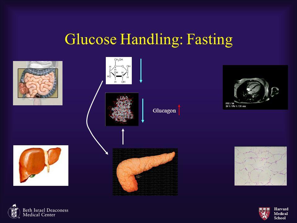 Harvard Medical School Glucose Handling: Fasting Glucagon