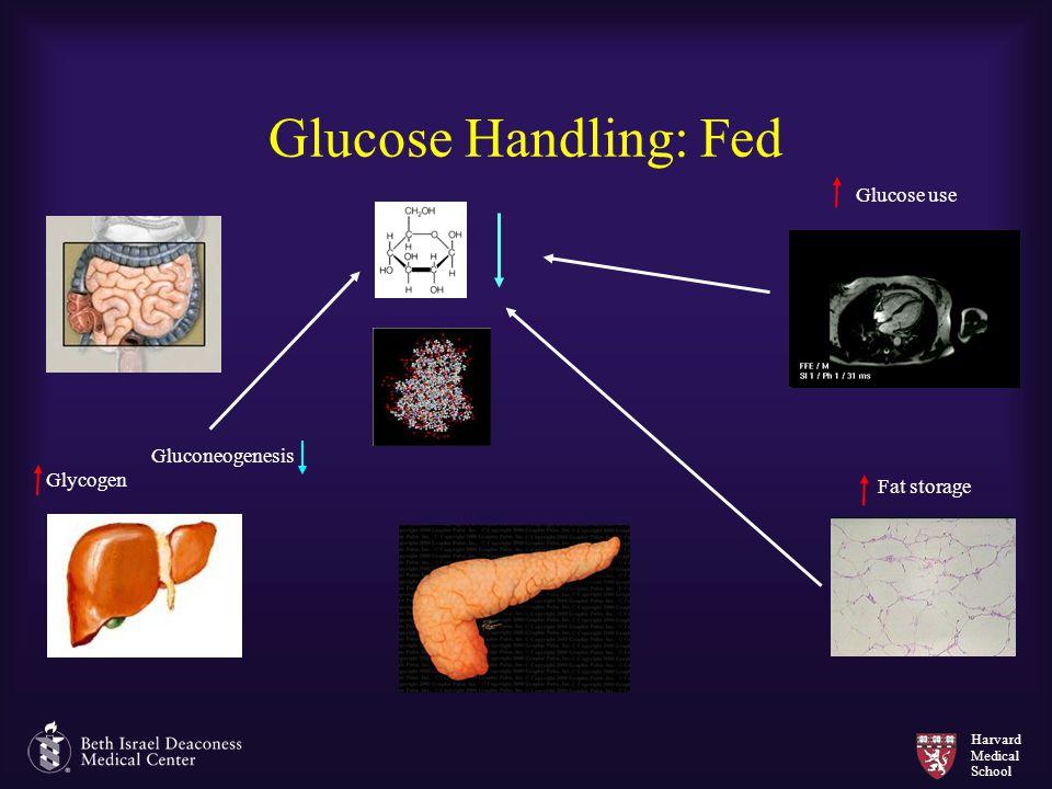 Harvard Medical School Glucose Handling: Fed Gluconeogenesis Glycogen Glucose use Fat storage