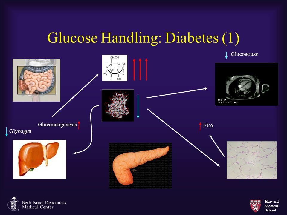 Harvard Medical School Glucose Handling: Diabetes (1) Gluconeogenesis Glycogen FFA Glucose use