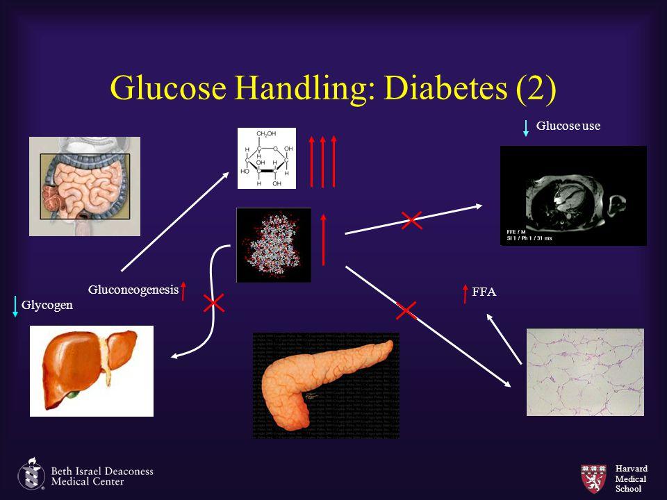 Harvard Medical School Glucose Handling: Diabetes (2) Gluconeogenesis Glycogen FFA Glucose use