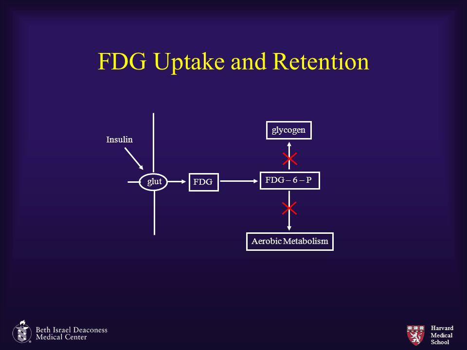 Harvard Medical School FDG Uptake and Retention glut FDG FDG – 6 – P glycogen Aerobic Metabolism Insulin