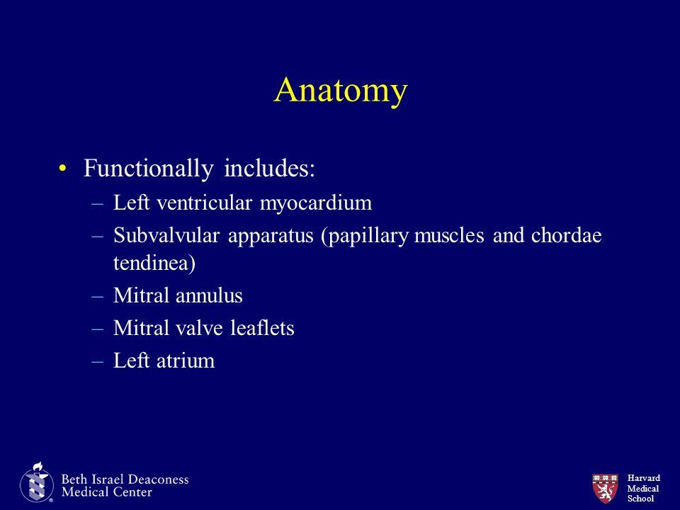Harvard Medical School Anatomy Functionally includes: –Left ventricular myocardium –Subvalvular apparatus (papillary muscles and chordae tendinea) –Mitral annulus –Mitral valve leaflets –Left atrium