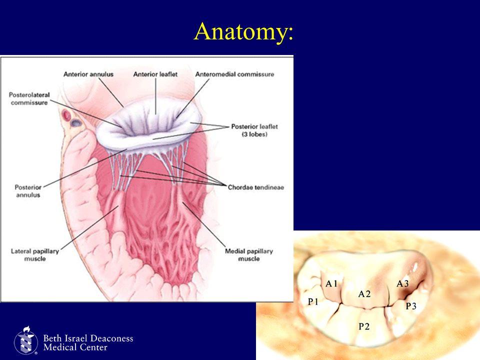 Harvard Medical School Anatomy:
