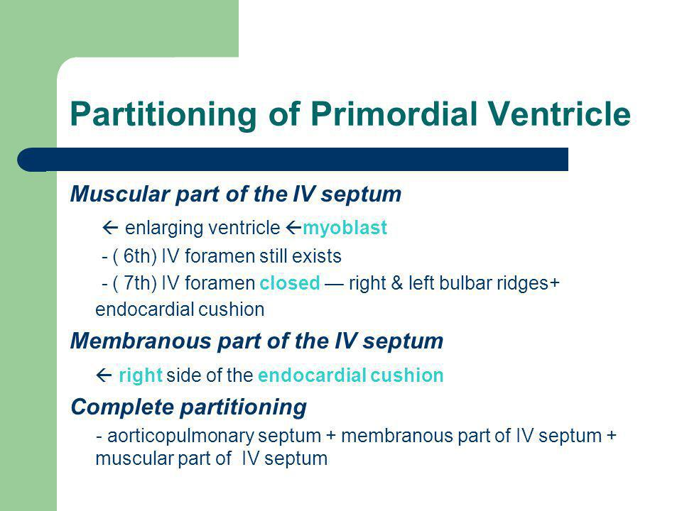 Partitioning of Primordial Ventricle Muscular part of the IV septum  enlarging ventricle  myoblast - ( 6th) IV foramen still exists - ( 7th) IV fora