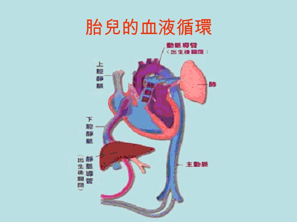 胎兒的血液循環
