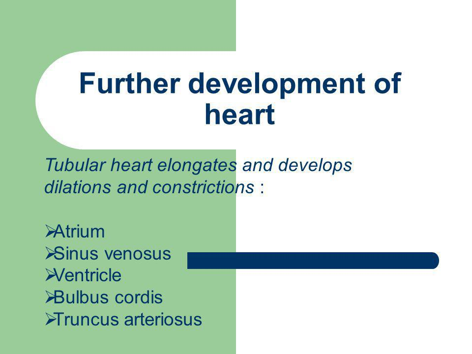 Partitioning of Primordial Heart Partitioning of Atrioventricular Canal Cardiac jelly → endocardial cushion (by the end of 4th week) Atrioventricular canal → left and right atrioventricular canal Endocardial cell → AV valves (mitral valve & tricuspid valve)