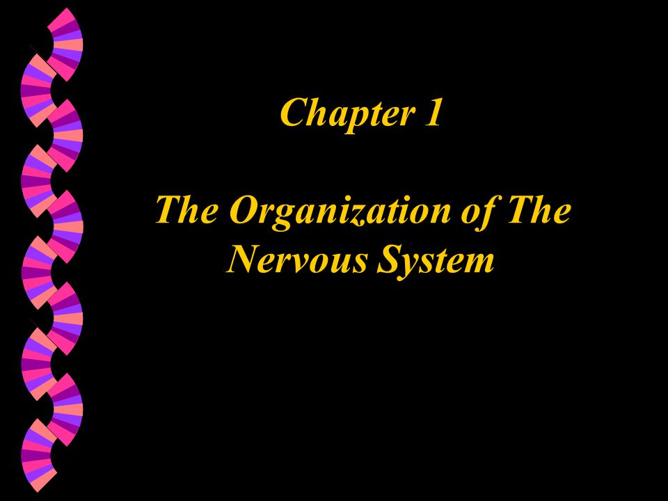 Chapter 1 The Organization of The Nervous System