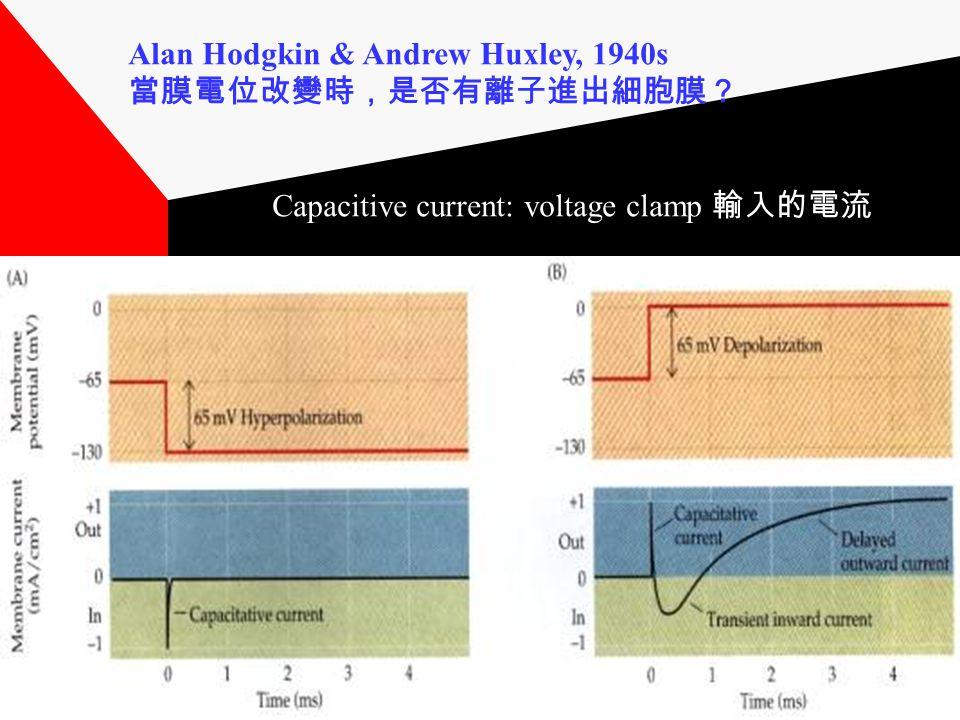 Alan Hodgkin & Andrew Huxley, 1940s 當膜電位改變時,是否有離子進出細胞膜? Capacitive current: voltage clamp 輸入的電流