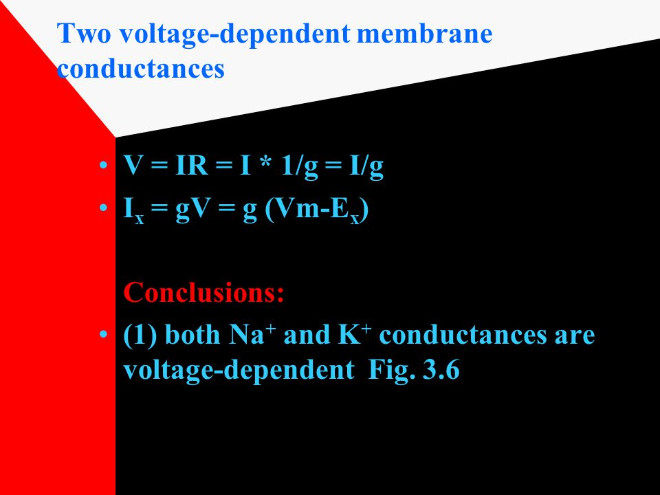 Two voltage-dependent membrane conductances V = IR = I * 1/g = I/g I x = gV = g (Vm-E x ) Conclusions: (1) both Na + and K + conductances are voltage-