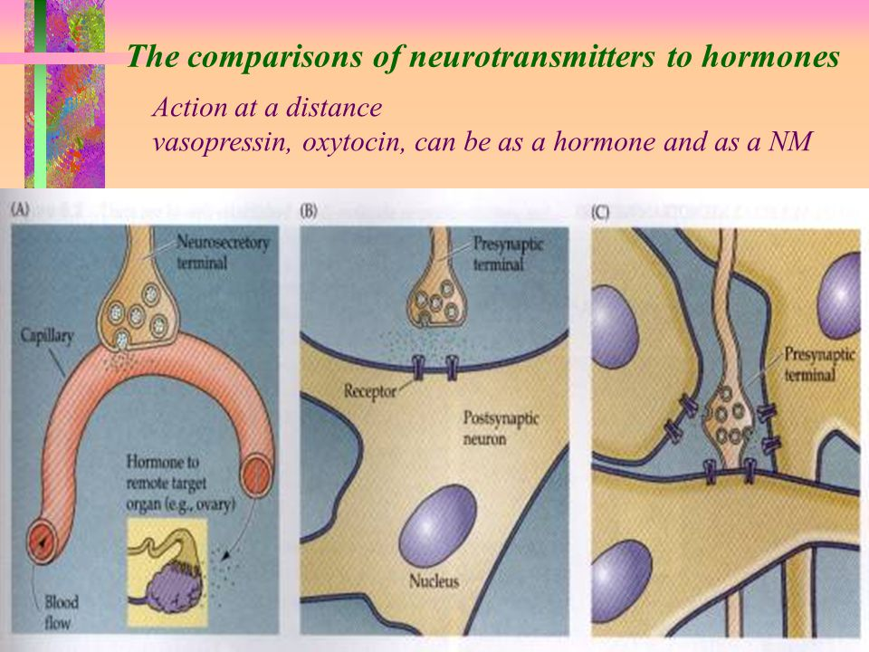 The comparisons of neurotransmitters to hormones Action at a distance vasopressin, oxytocin, can be as a hormone and as a NM