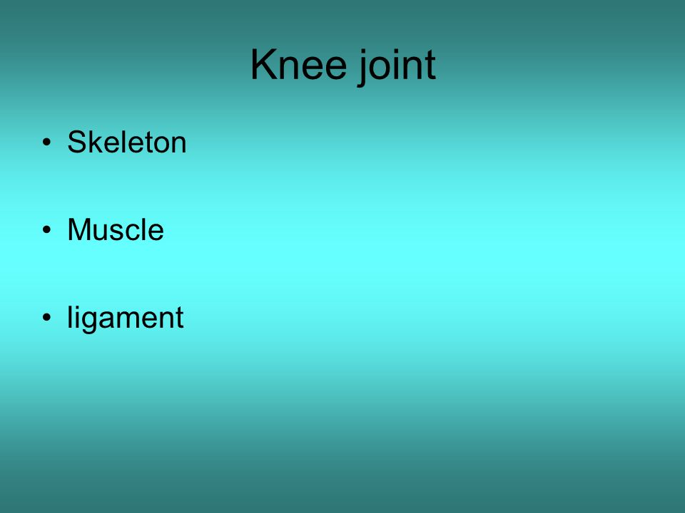 Knee joint Skeleton Muscle ligament