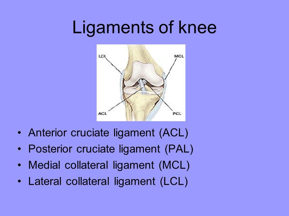 Anterior cruciate ligament (ACL) Posterior cruciate ligament (PAL) Medial collateral ligament (MCL) Lateral collateral ligament (LCL)