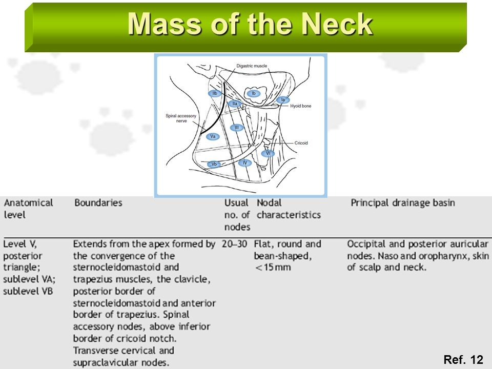 Mass of the Neck Ref. 12