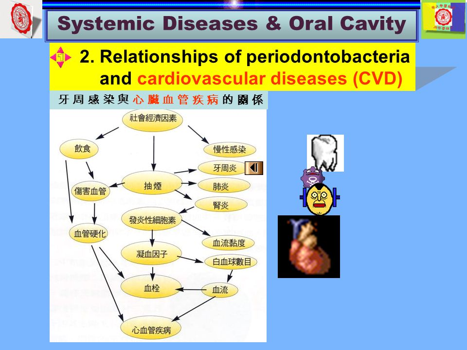 Systemic Diseases & Oral Cavity 2.