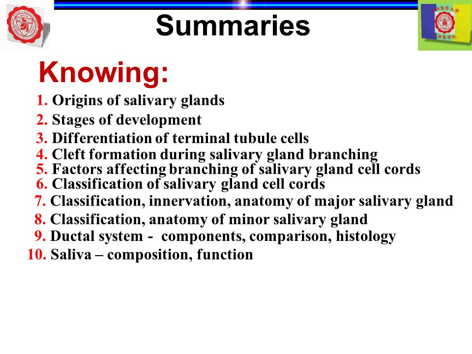 Summaries Knowing: 1. Origins of salivary glands 2. Stages of development 3. Differentiation of terminal tubule cells 4. Cleft formation during saliva