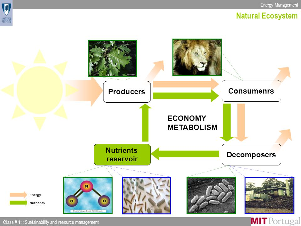Energy Management Class # 1 :: Sustainability and resource management Slide 12 of 53 Producers Consumenrs Decomposers Nutrients reservoir Energy Nutrients Natural Ecosystem ECONOMY METABOLISM