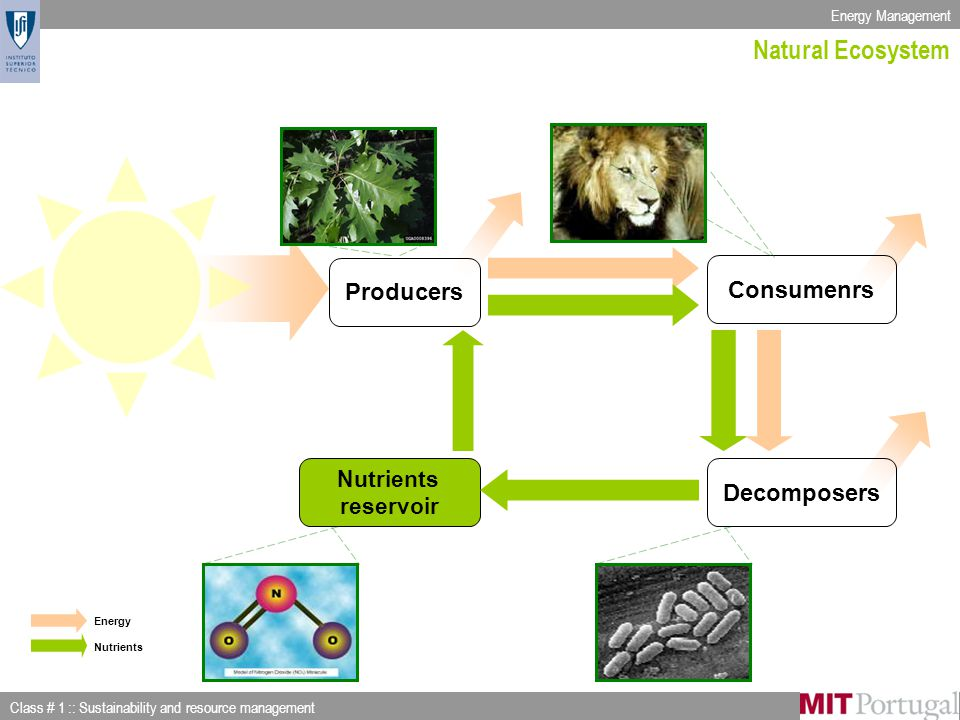 Energy Management Class # 1 :: Sustainability and resource management Slide 3 of 53 Producers Consumenrs Decomposers Nutrients reservoir Energy Nutrients Natural Ecosystem