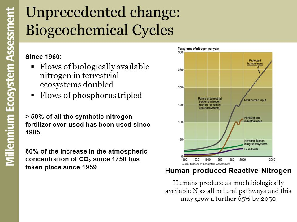 Unprecedented change: Biogeochemical Cycles Since 1960:  Flows of biologically available nitrogen in terrestrial ecosystems doubled  Flows of phosph