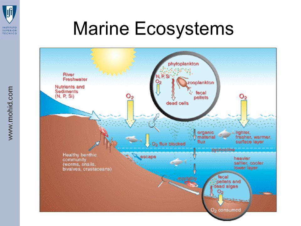 www.mohid.com BEST – IST, 2006 Marine Ecosystems