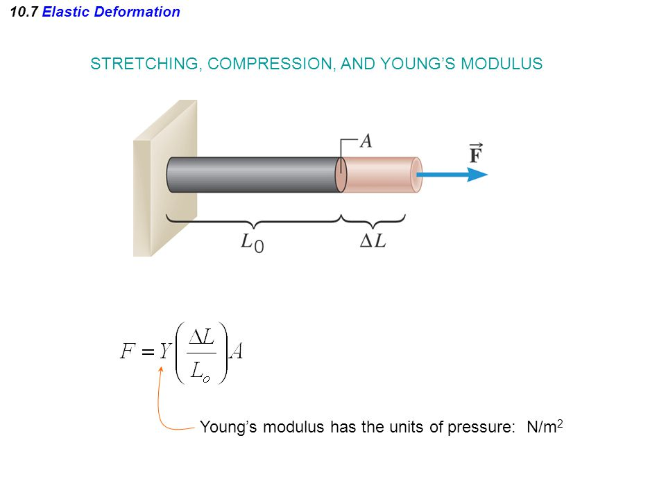 10.7 Elastic Deformation STRETCHING, COMPRESSION, AND YOUNG'S MODULUS Young's modulus has the units of pressure: N/m 2