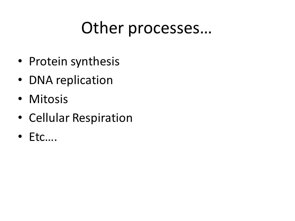 Other processes… Protein synthesis DNA replication Mitosis Cellular Respiration Etc….