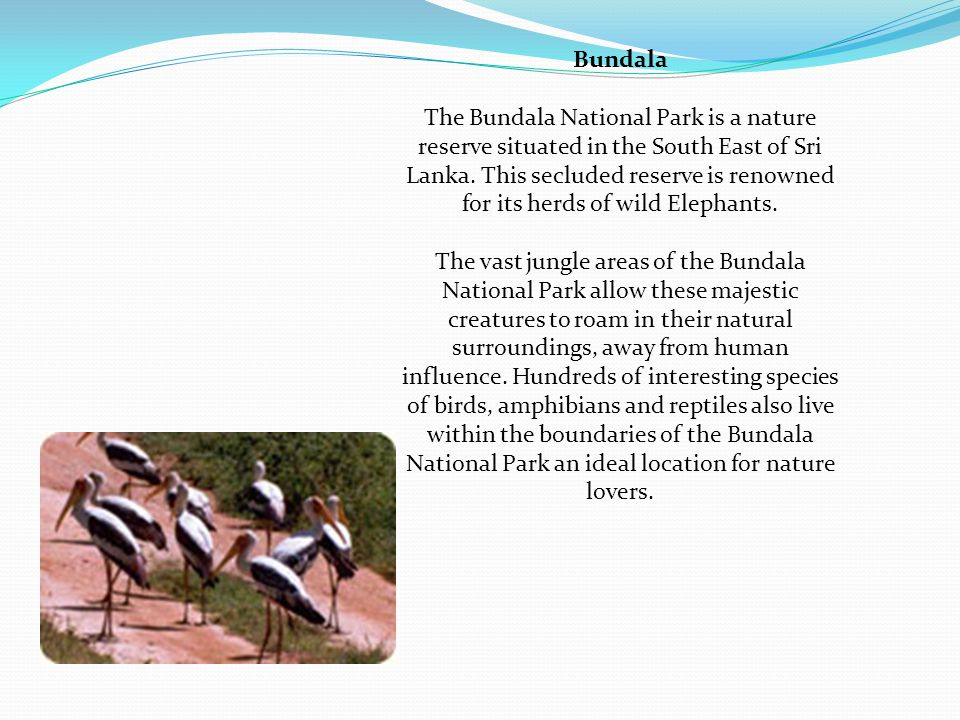 Bundala The Bundala National Park is a nature reserve situated in the South East of Sri Lanka.