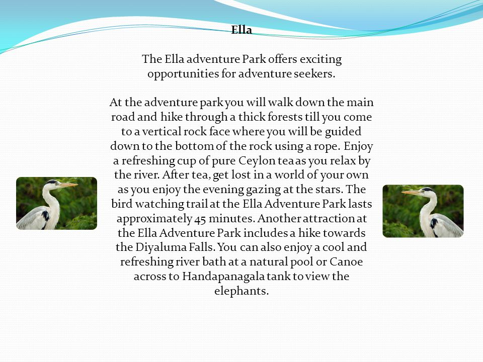 Ella The Ella adventure Park offers exciting opportunities for adventure seekers.