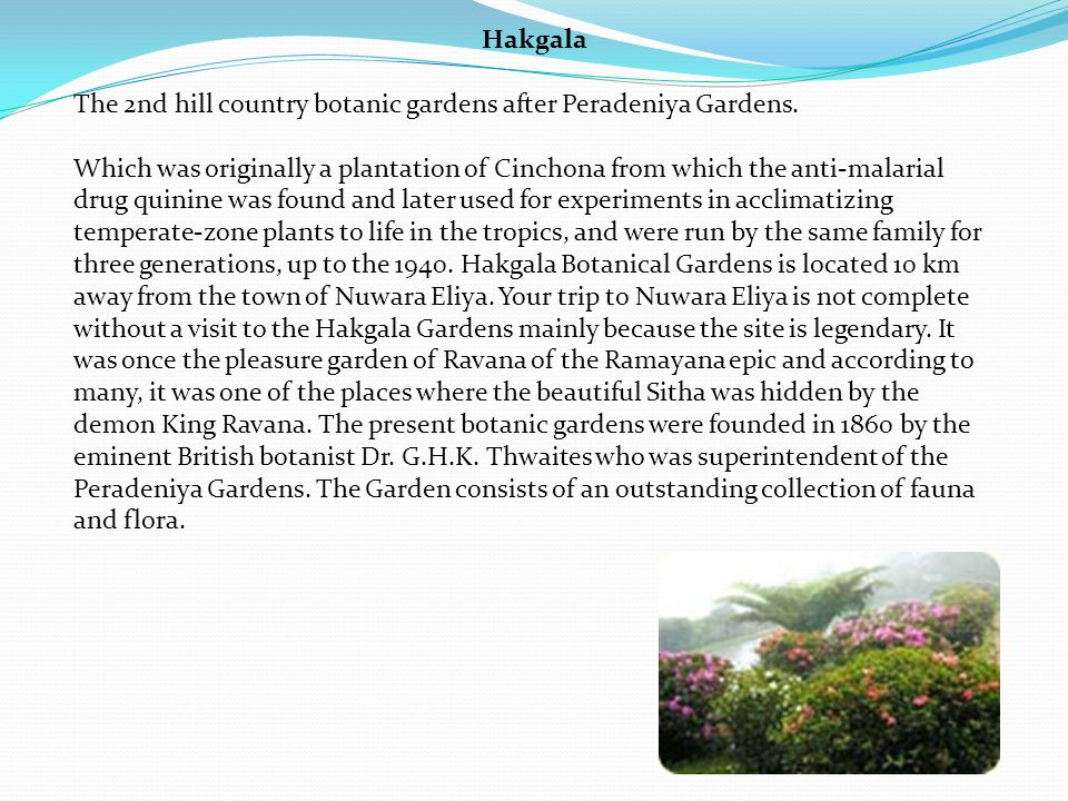 Hakgala The 2nd hill country botanic gardens after Peradeniya Gardens.