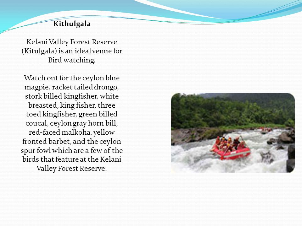 Kithulgala Kelani Valley Forest Reserve (Kitulgala) is an ideal venue for Bird watching.