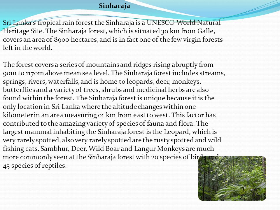 Sinharaja Sri Lanka s tropical rain forest the Sinharaja is a UNESCO World Natural Heritage Site.