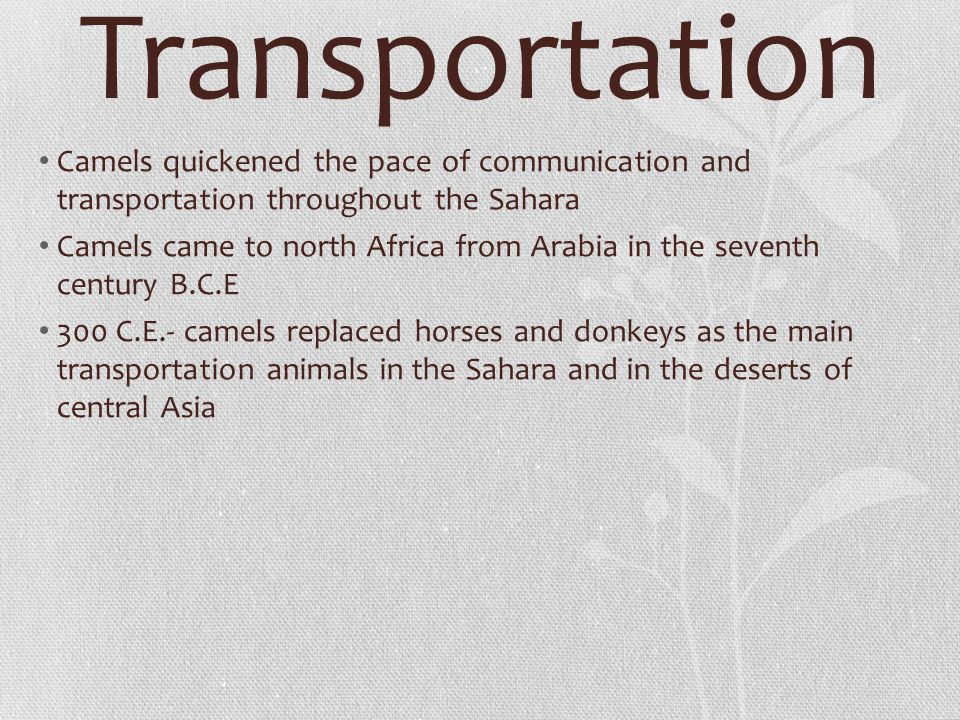 Transportation Camels quickened the pace of communication and transportation throughout the Sahara Camels came to north Africa from Arabia in the seve