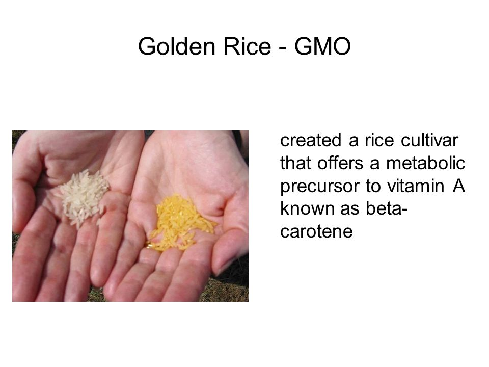 Golden Rice - GMO created a rice cultivar that offers a metabolic precursor to vitamin A known as beta- carotene
