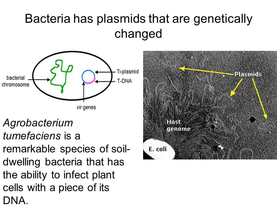 Aim: How do we change characteristics ? Making Human Insulin uses recombinant gene technology