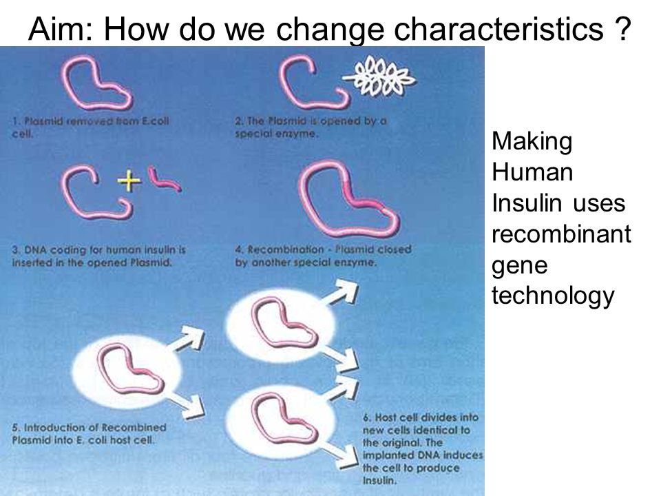 Aim: How do we change characteristics Making Human Insulin uses recombinant gene technology