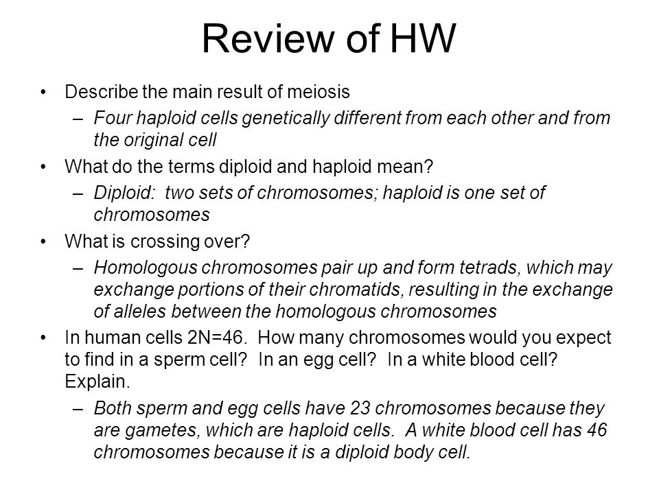 Review of HW Describe the main result of meiosis –Four haploid cells genetically different from each other and from the original cell What do the term