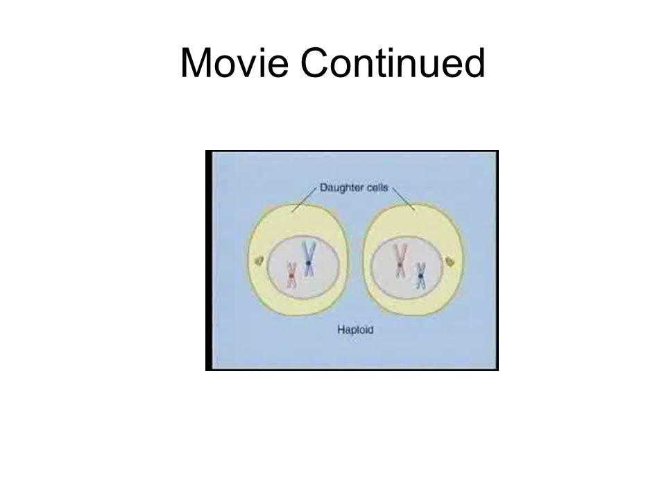 Movie Continued