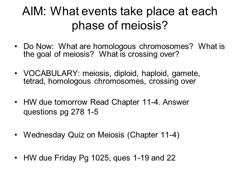 AIM: What events take place at each phase of meiosis? Do Now: What are homologous chromosomes? What is the goal of meiosis? What is crossing over? VOC