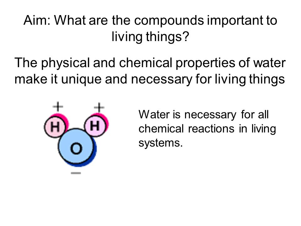 Aim: What are the compounds important to living things.