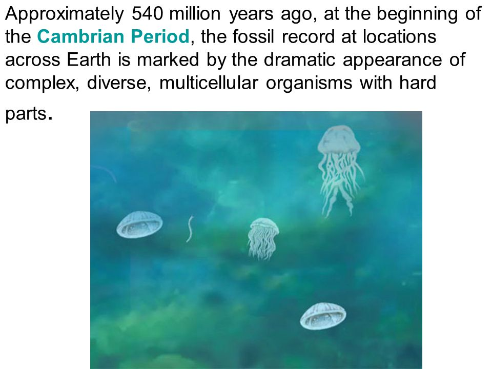 Ocean Life Diversifies sponges, corals, and brachiopods occupied the seafloor, trilobites, cephalopods
