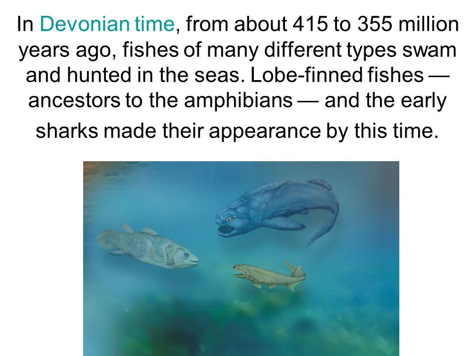 Amphibians Some lobe-finned fish evolved webbed, leg-like limbs.
