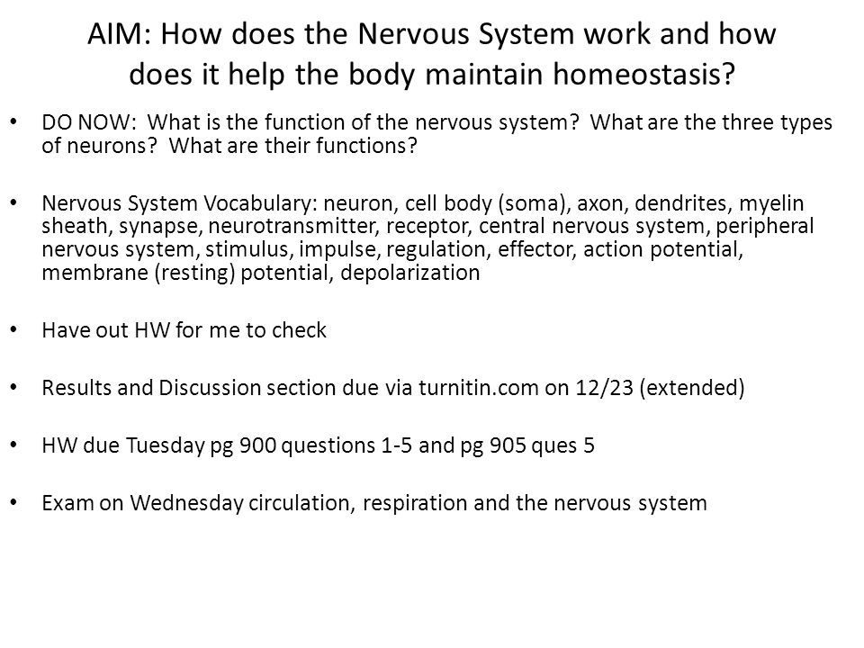 AIM: How does the Nervous System work and how does it help the body maintain homeostasis? DO NOW: What is the function of the nervous system? What are