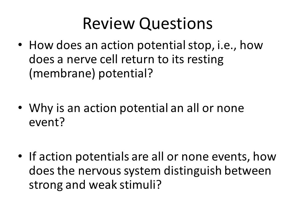 Review Questions How does an action potential stop, i.e., how does a nerve cell return to its resting (membrane) potential? Why is an action potential